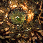 Mouth of Adult Sea Urchin